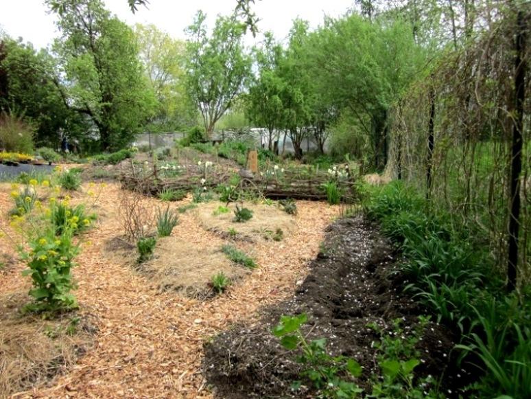 Šparglji v Ekološkem vrtičku