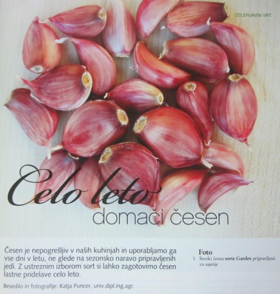 Česen Rože & VRT 1